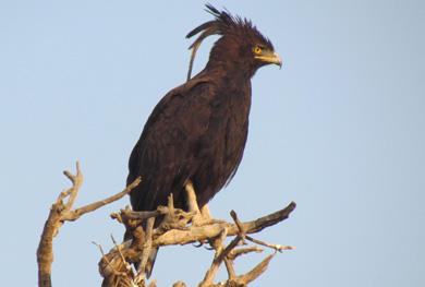 15 Days Kenya Tanzania Birding Safari