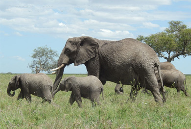 4days-ngorongoro-wildlife-tour
