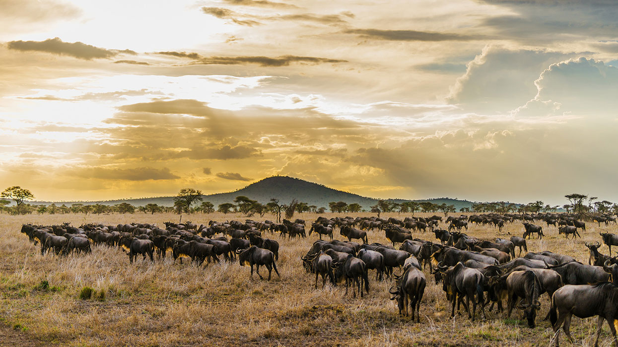 Tanzania Wildlife photography Serengeti North Wildebeest on the Plains