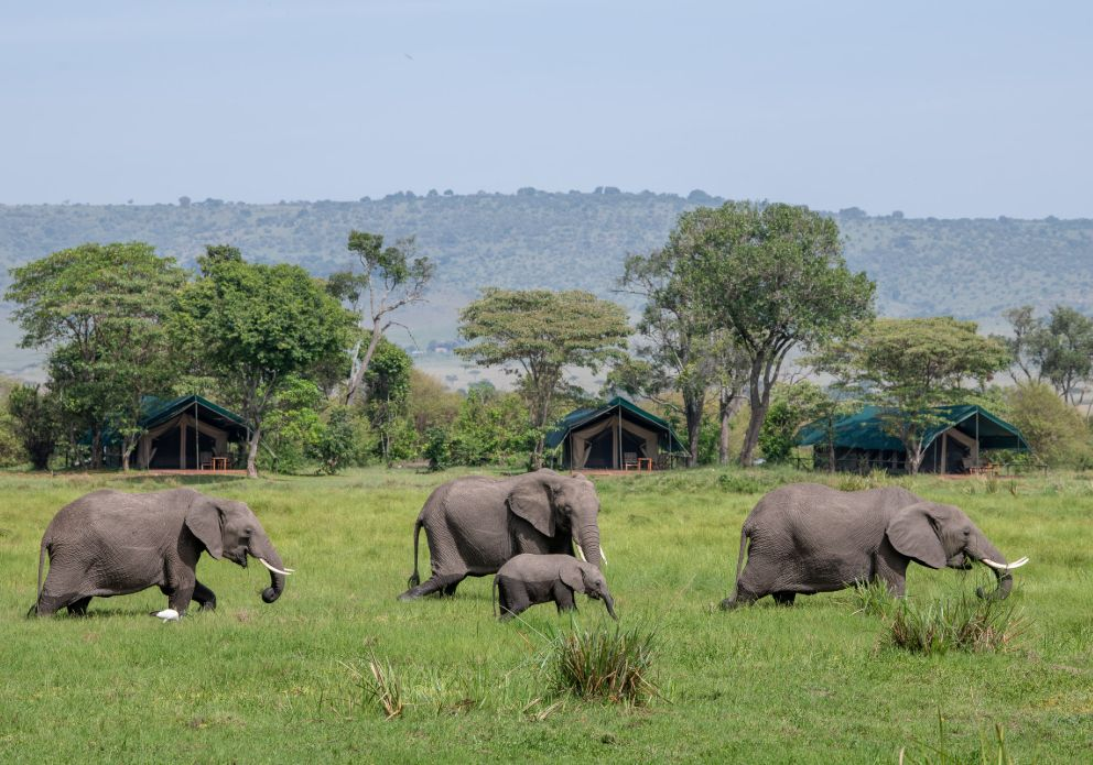 Little Governors Camp outside views with wildlife