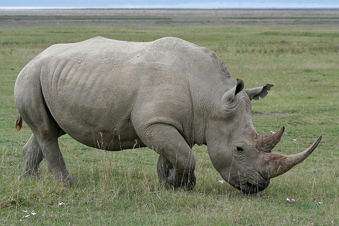 10 days Classic Tour Kenya Tanzania Safari